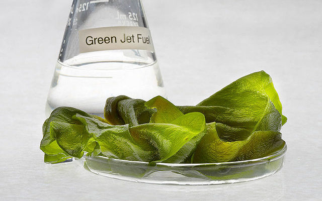 https://commons.wikimedia.org/wiki/File:Algae_fuel_in_a_beaker.jpg