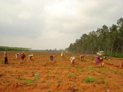 https://en.wikipedia.org/wiki/Tree_planting