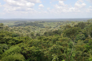 https://commons.wikimedia.org/wiki/File:French_Guiana_tropical_forest_towards_Cacao.jpg