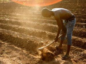 Farmer in Malawi by Stephen Morrison, AusAID/Wikipedia