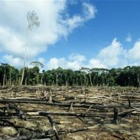 Countries Miss All 20 Targets Under UN Biodiversity Convention