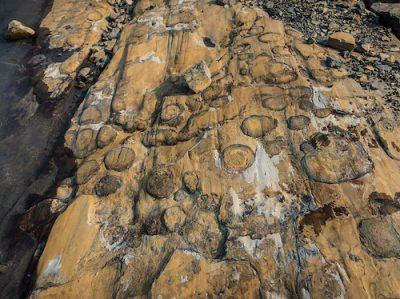 stromatolite fossil biomimicry