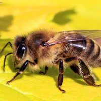 'Essential' Insect Populations Declining by 1-2% Per Year