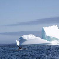 Fragile Labrador Sea Ice Arrives Five Weeks Late, 85% Thinner