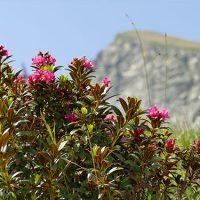 Rapid Alpine Warming Threatens Soil Carbon, Food Production
